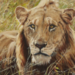 """Watching,"" 16x20, oil on canvas, is in a private collection, Australia.  Limited edition giclees are available."