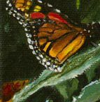 """Monarchs 2,"" o/c, 10x10 Gallery Wrapped"