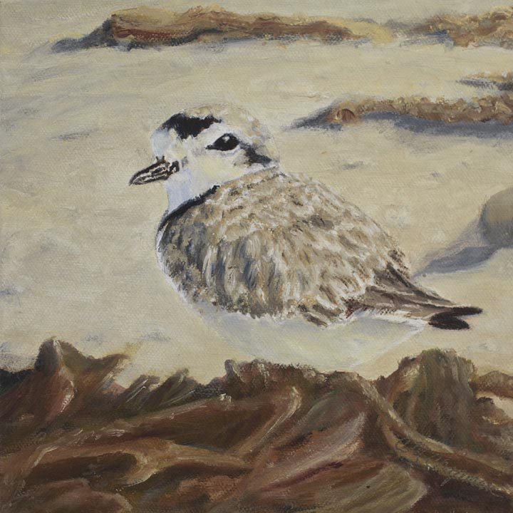 """Western Snwy Plover,"" Oil/Canvas, 8x8, Wrapped"