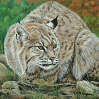 """Chillin',"" 12x12 (Bobcat), wrapped, is in a private collection."